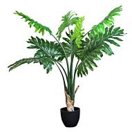 Philodendron w Pot 120cmH