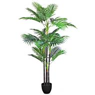 Cane Palm w/ Pot 150cmH