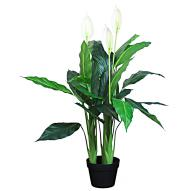Spathiphyllum with Pot 95cmH
