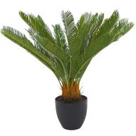 Cycad with Pot 71cmH