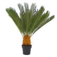 Cycad with Pot 93cmH