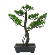 Bonsai w/ Pot 30cmH