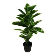 Rubber Tree with Pot 75cmH