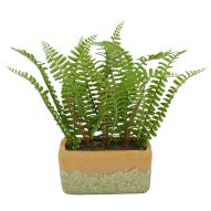 Fern with Rectangle pot 26cmH