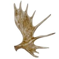 Elk Horn Wall Art