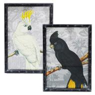 Cockatoo Wall Art Astd 90cmH