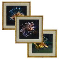Lion Fish Wall Art Astd 50cmH