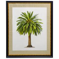 Canary Palm Wall Art